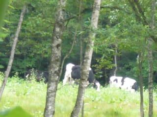 niseko country farmへ ハイジと薪ストーブ ロバヲのマフィン