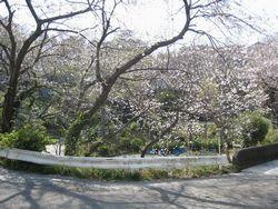 のの字橋の桜
