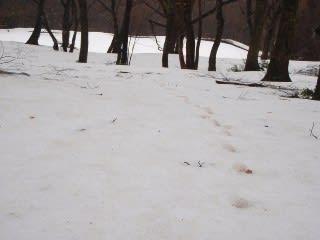 痕跡1。雪と雨で跡が分からなくなるなぁ…と思いきや。黄砂のお陰(?)でハッキリと見えるようになっていました。