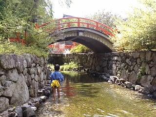 京都「下鴨神社」に来ています