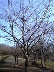 台湾リスの巣