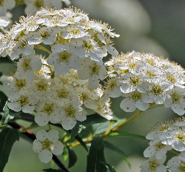 自然の風景と花