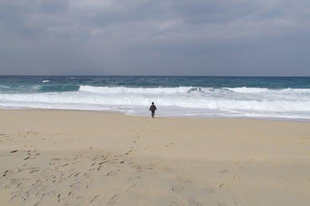 屋久島ウミガメの産卵地