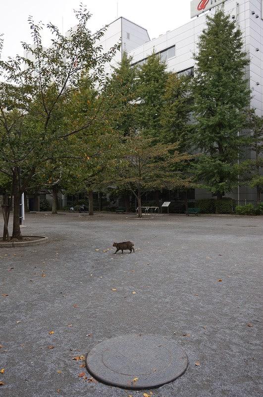 Tokyo131109