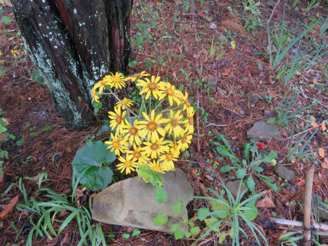 Lost and Found in November (Flowers) / 2