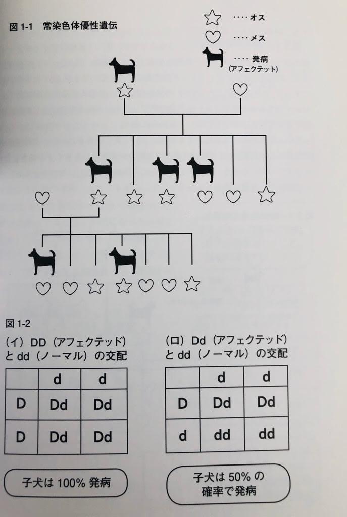遺伝 優性 遺伝 違い 劣性 優性遺伝と劣性遺伝の違いがイマイチ理解出来ません。伴性という言葉