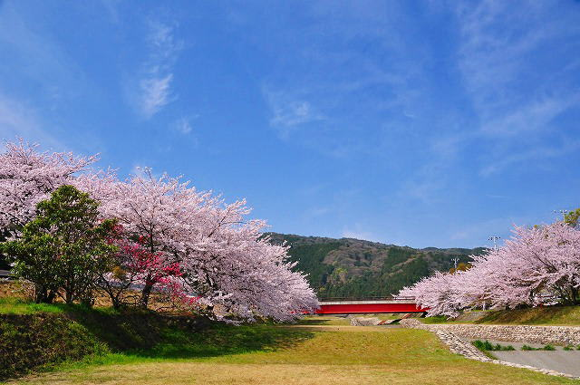 羽根谷だんだん公園。。。。。桜...