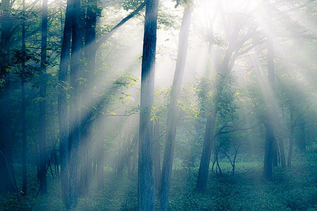 森の中の光芒の写真