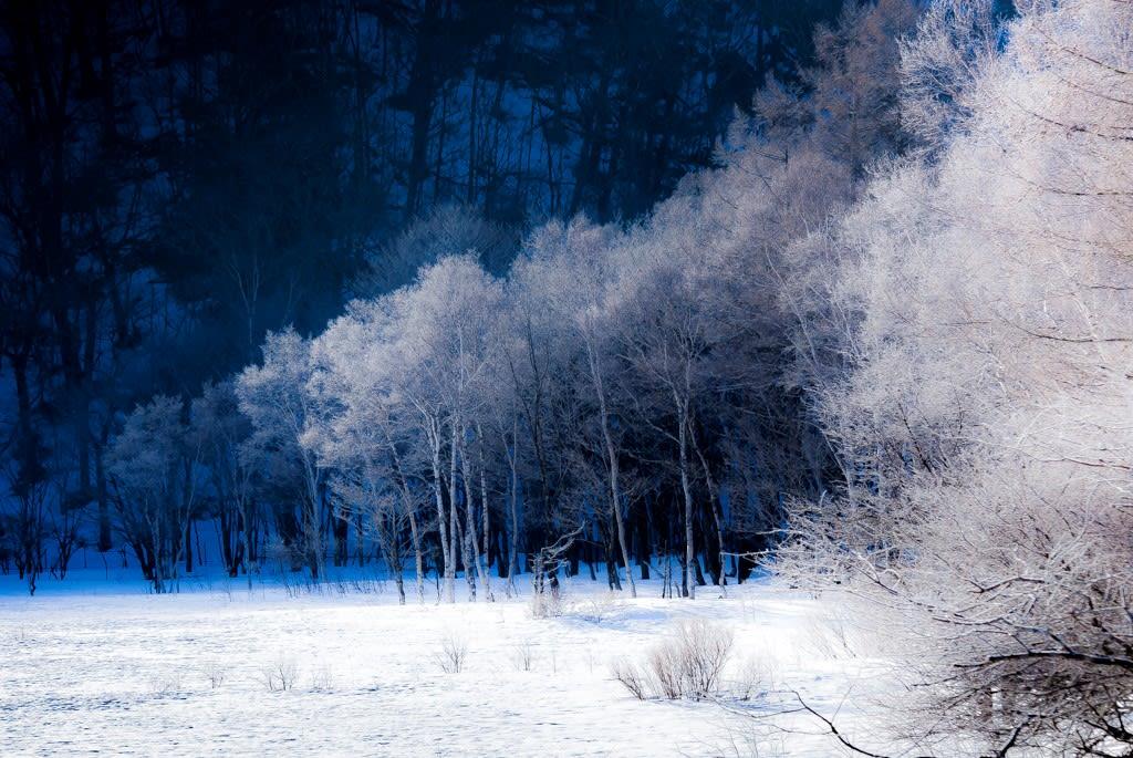 白樺霧氷写真