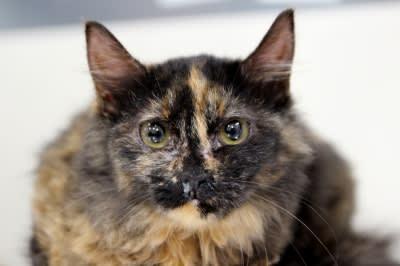 サビ猫写真
