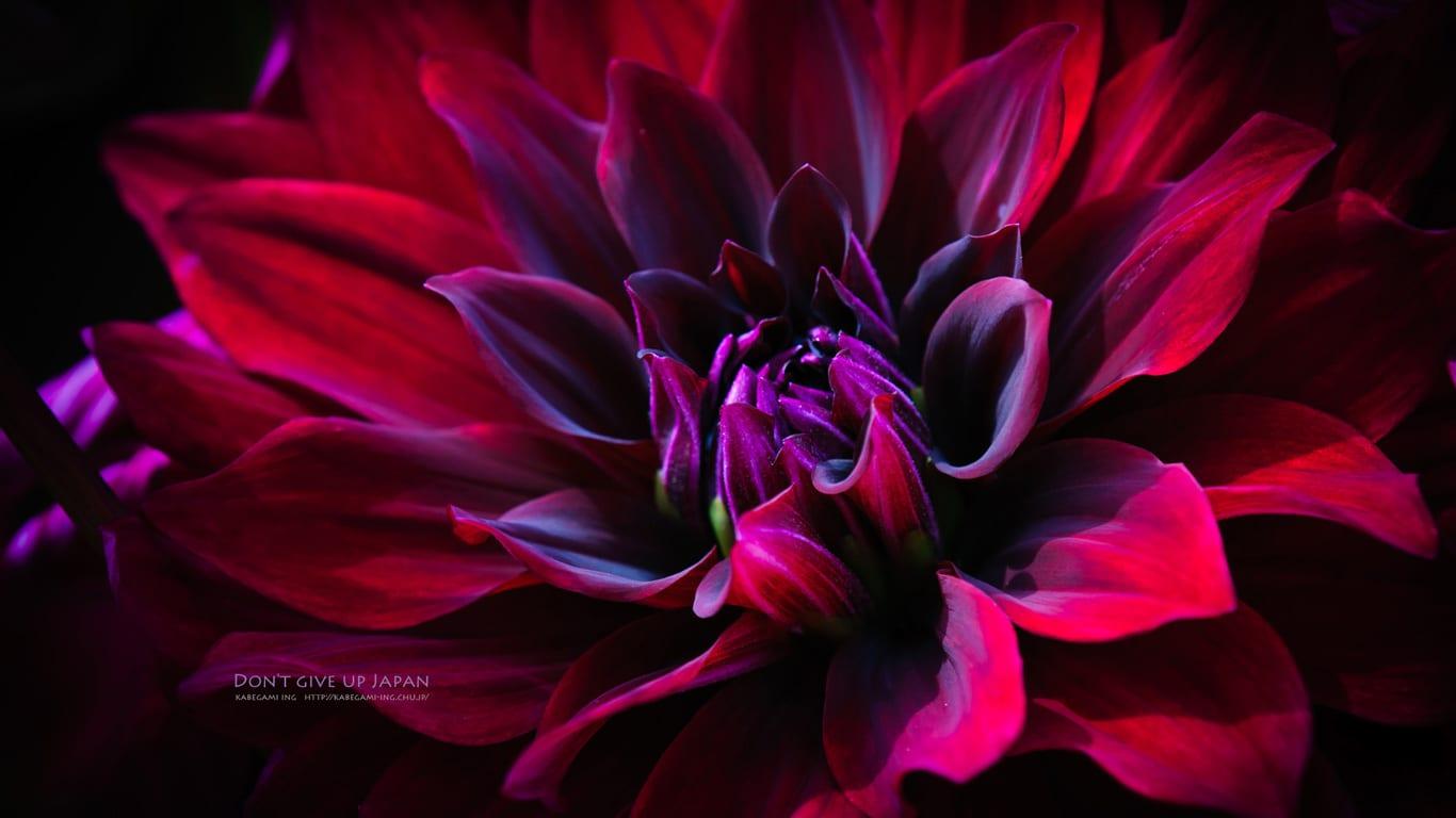 妖艶な花 壁紙ing管理人の写真ブログ