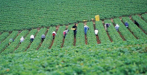 バイオ集約的な菜園活動― - 白寿を目指す健康長寿ライフへの誘い