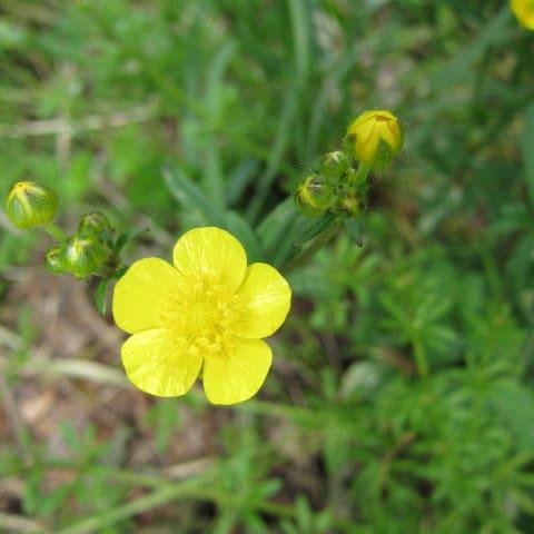 お花が好き ぼおっと眺める草木との時間を記録して