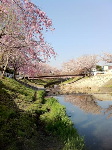 Sakurabridge