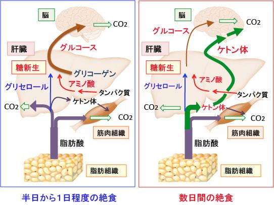 「糖質」に注意して予防改善!糖尿病 | カラダの豆 …