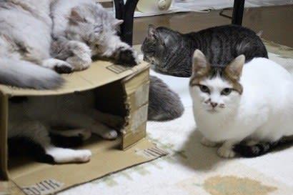 箱の中は誰?