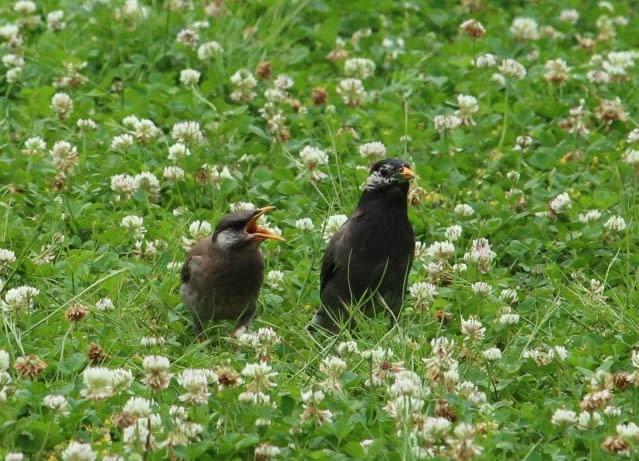 4、野鳥の雛の餌は? » Bird Clinic 金坂動物病院