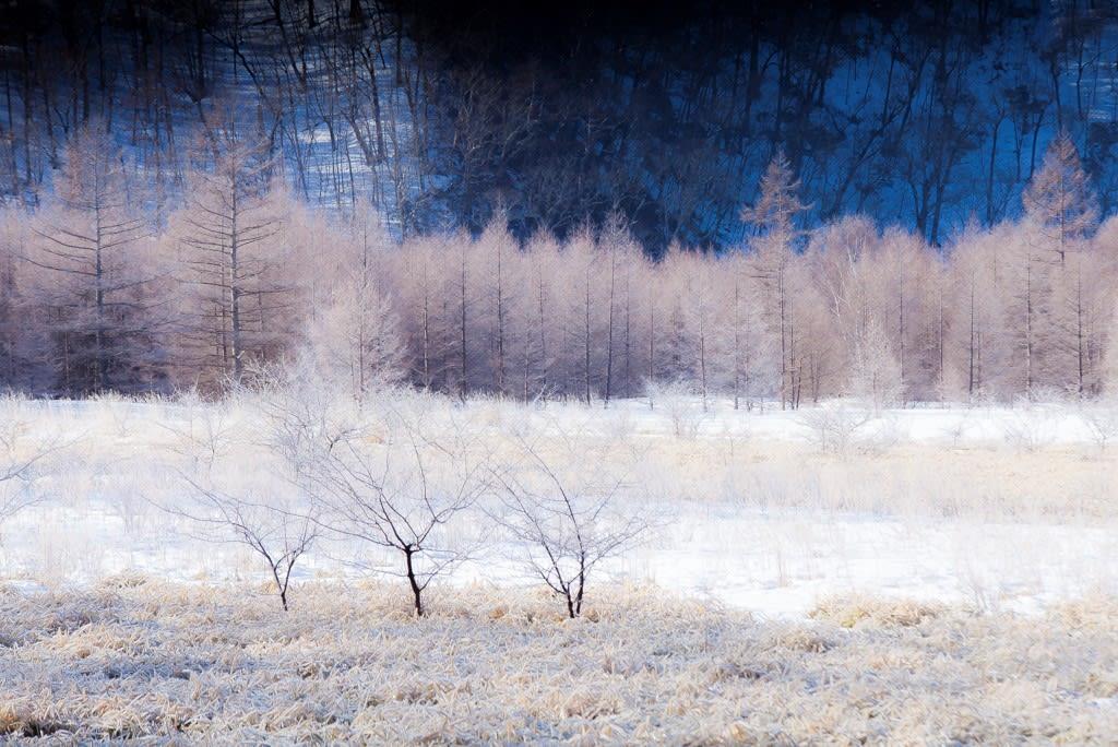 小田代ヶ原の霧氷写真