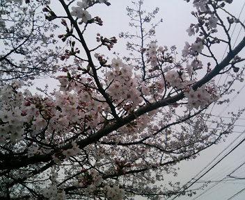 春・・・桜