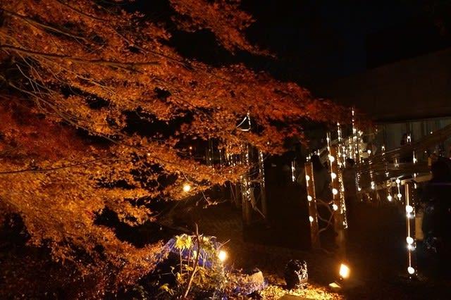 三重県総合文化センター「そうぶんの竹あかり」見てきました〜(^^)