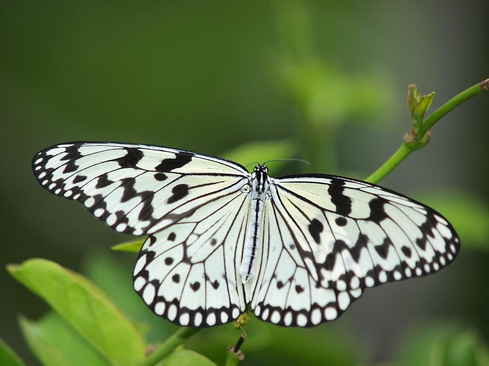 綺麗 な 蝶