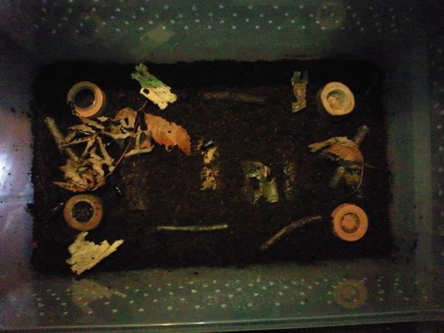 飼育 ケース クワガタ 飼育用品:クワガタやカブトムシなど昆虫用の各種飼育用品の販売