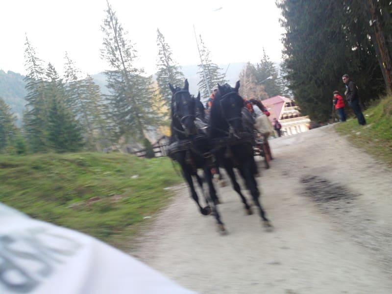 131103_horse09_2