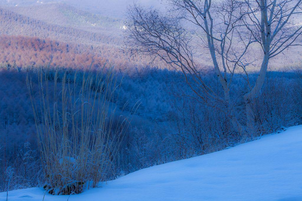 白樺高原の霧氷