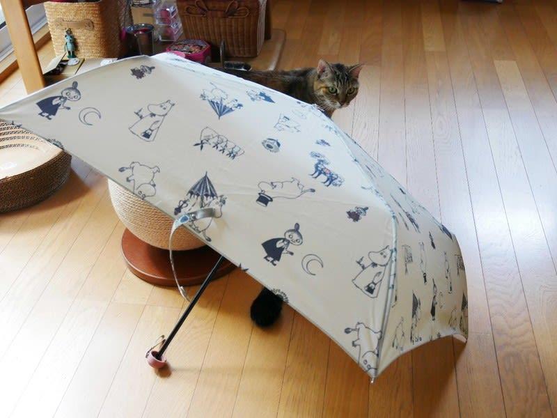 梅雨だから猫たちも傘