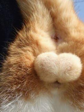 生き物のなかで一番デカイキンタマを持ってるのはなーんだ 体重比だよーん ぶろぐ猫の目