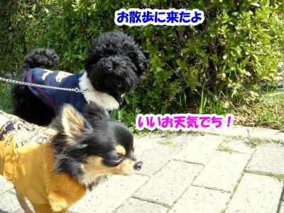 https://blogimg.goo.ne.jp/user_image/06/fd/cb63f15794e9c2f5defc9de8d24d1f30.jpg