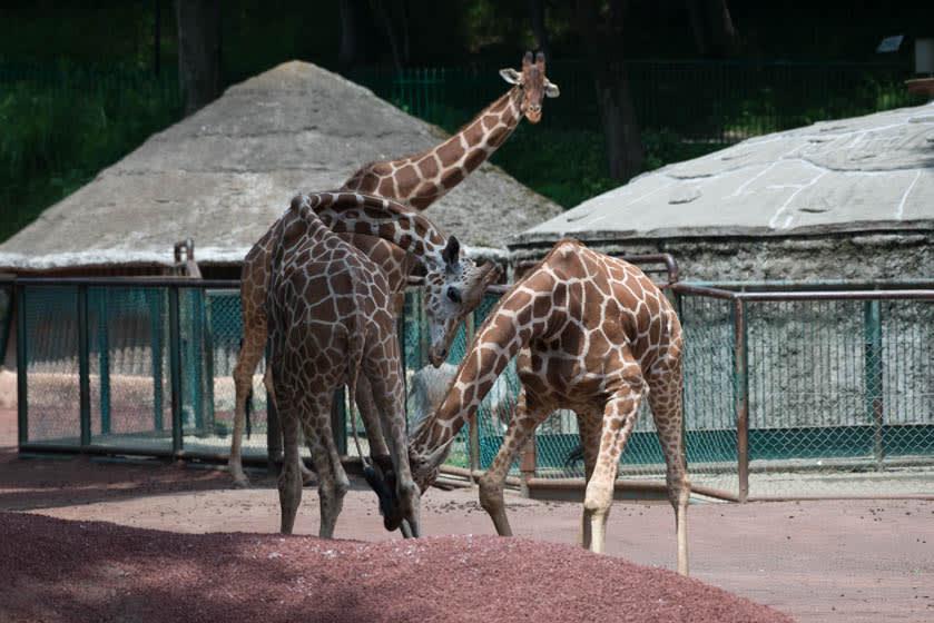 多摩 動物 公園 事故