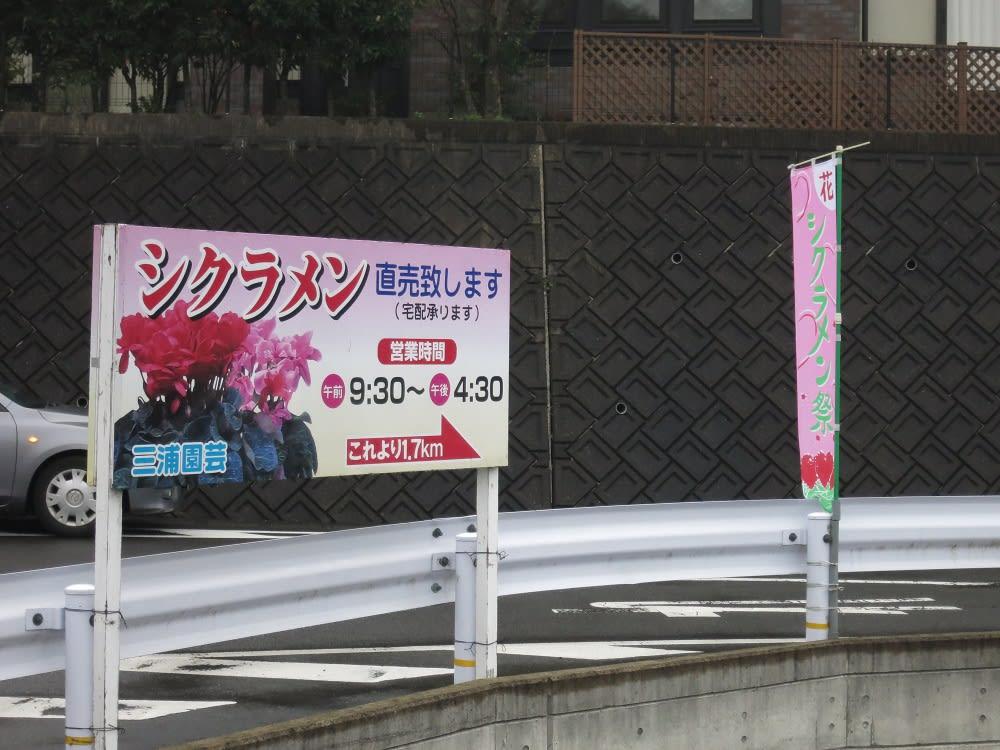 長崎シクラメン・早坂の三浦園芸へ2016 ~R324を …