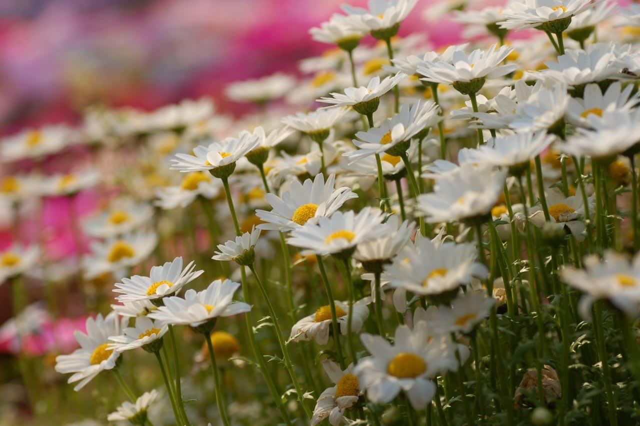 ∇春ですね〜 ( ^ ^ ) ♪ - ^^玩...