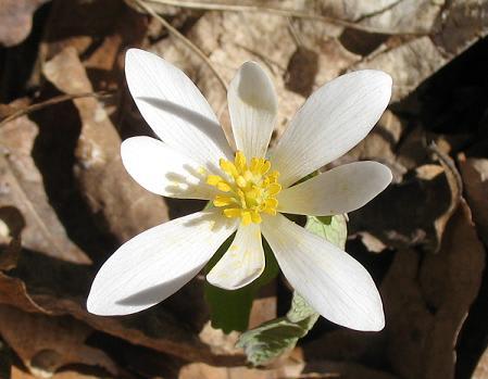 ようやく春の気配を見せるナイアガラ・グレン