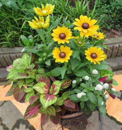 橙色の花とコリウス