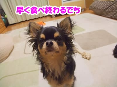 https://blogimg.goo.ne.jp/user_image/08/33/451a16ce5f5b498dea9041d68f0efedf.jpg