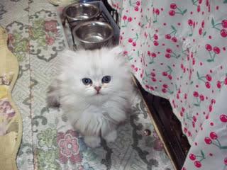 マリアママの子猫ちゃん~