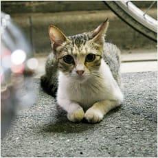 「野良猫を見つけたらどうすればいい? ←こ」の質問画像