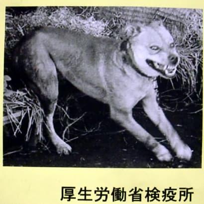 怖い 狂犬病 水 が