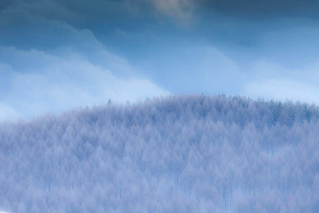 霧ケ峰の霧氷写真
