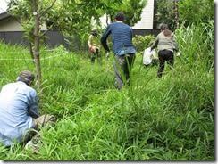 ④草地の笹刈り