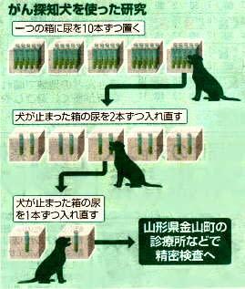 がん検知犬を使った研究イラスト