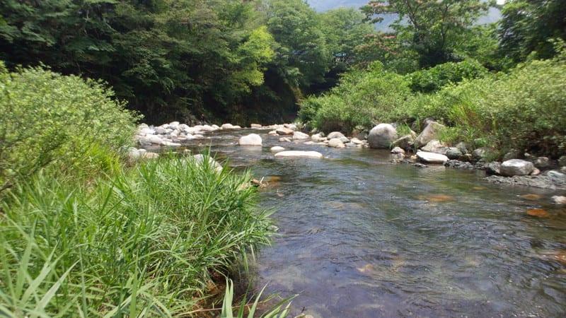 坂内川で「どへぼ」鮎釣り - く...