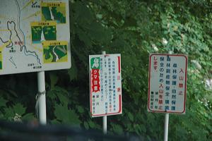 5_furisode_kodaru_4
