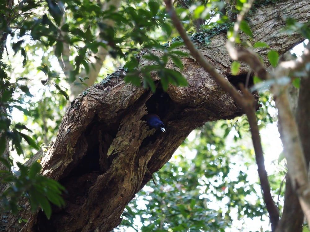 世界の飛べない鳥15選 - 雑学ミステリー