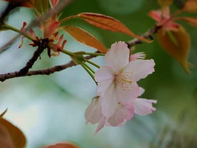 花 はな 華