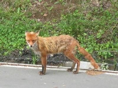 北海道で出会った動物達