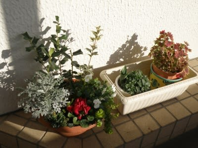 寄せ植え鉢-1130