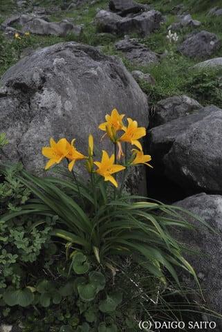 花々の雰囲気Ⅰ